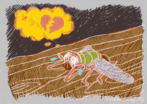A Fly's Worry
